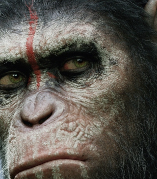 Free Dawn Of The Planet Of The Apes 2014 Picture for Nokia C1-01