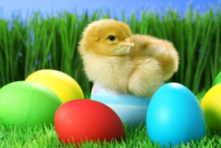 Free Yellow Chick And Easter Eggs Picture for Android, iPhone and iPad