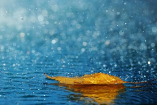 Yellow Leaf In The Rain - Obrázkek zdarma