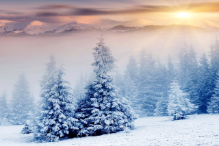 Winter Nature in Prisma Editor Wallpaper for Widescreen Desktop PC 1920x1080 Full HD