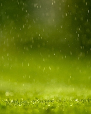 Water Drops And Green Grass Wallpaper for HTC Titan