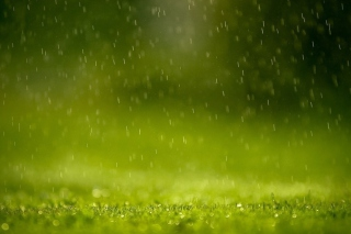 Water Drops And Green Grass sfondi gratuiti per cellulari Android, iPhone, iPad e desktop