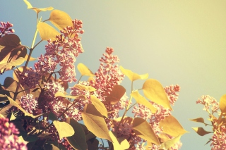 Spring Lilac Background for Android, iPhone and iPad