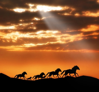 Horses Running Free Background for 2048x2048