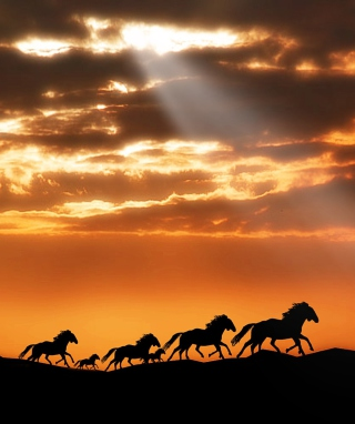 Horses Running Free Background for 128x160