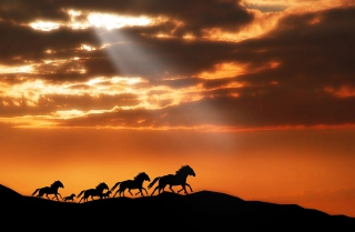 Horses Running Free Background for Android, iPhone and iPad