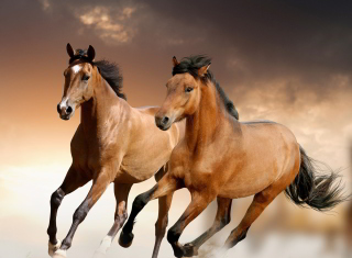 Horse Picture for Android, iPhone and iPad