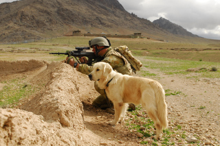 Free Soldier With Dog Picture for Android, iPhone and iPad