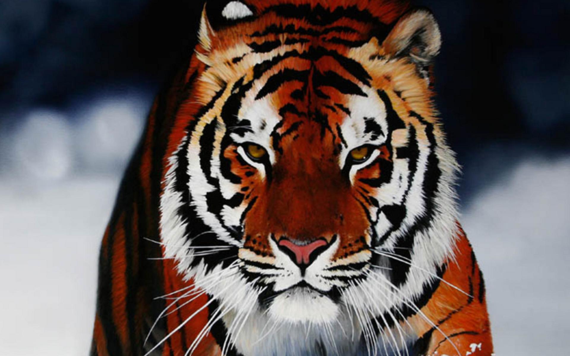 Красивые картинки на телефон тигрица