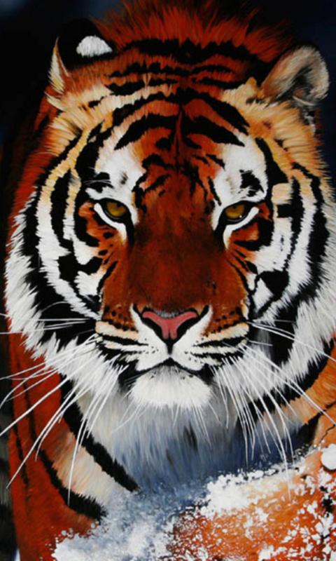 излишняя влага картинки для телефона тигры название: промежуточный комбинезон