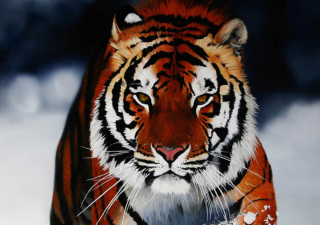 Cute Tiger Wallpaper for Android, iPhone and iPad