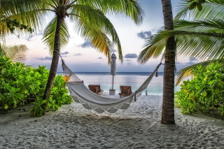 Free Hammock At Maldives Beach Picture for Android, iPhone and iPad