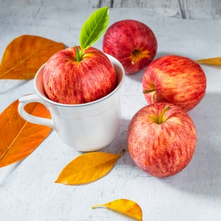 Free Autumn apples Picture for iPad