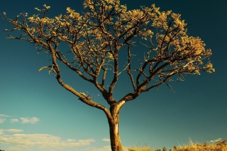 Tree Against Sky - Fondos de pantalla gratis para HTC One V