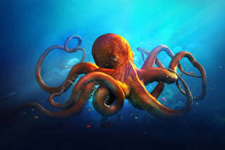 Octopus HD Picture for Android 480x800