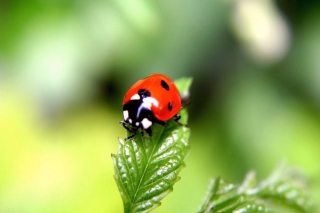 Cute Ladybird Wallpaper for Android, iPhone and iPad