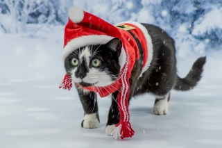 Kostenloses Winter Beauty Cat Wallpaper für Android, iPhone und iPad