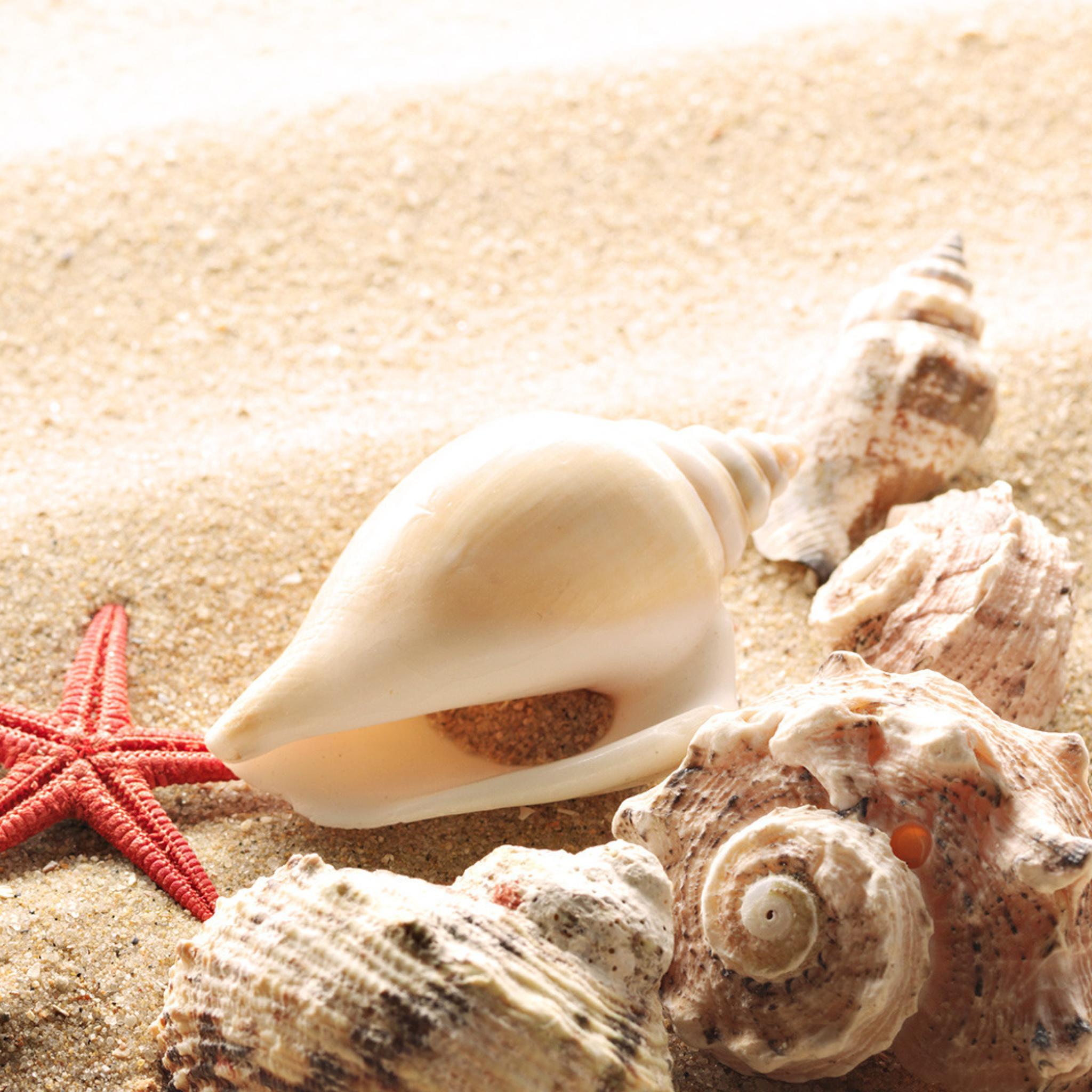 природа украшения морская звезда раковина бесплатно