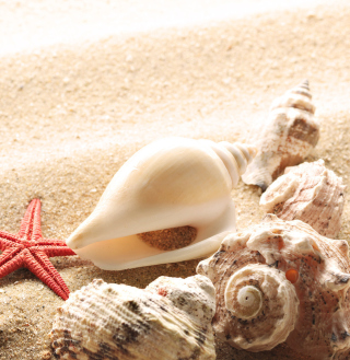 Kostenloses Seashells On The Beach Wallpaper für 1024x1024