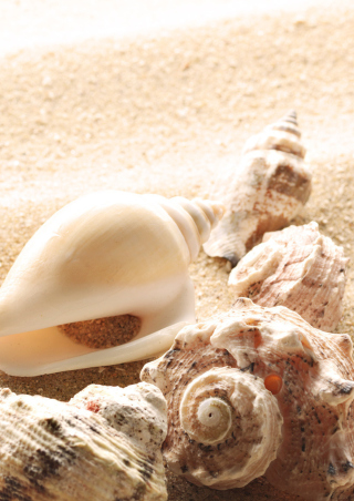 Free Seashells On The Beach Picture for Nokia C1-00