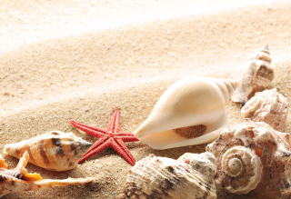 Seashells On The Beach Background for Android, iPhone and iPad