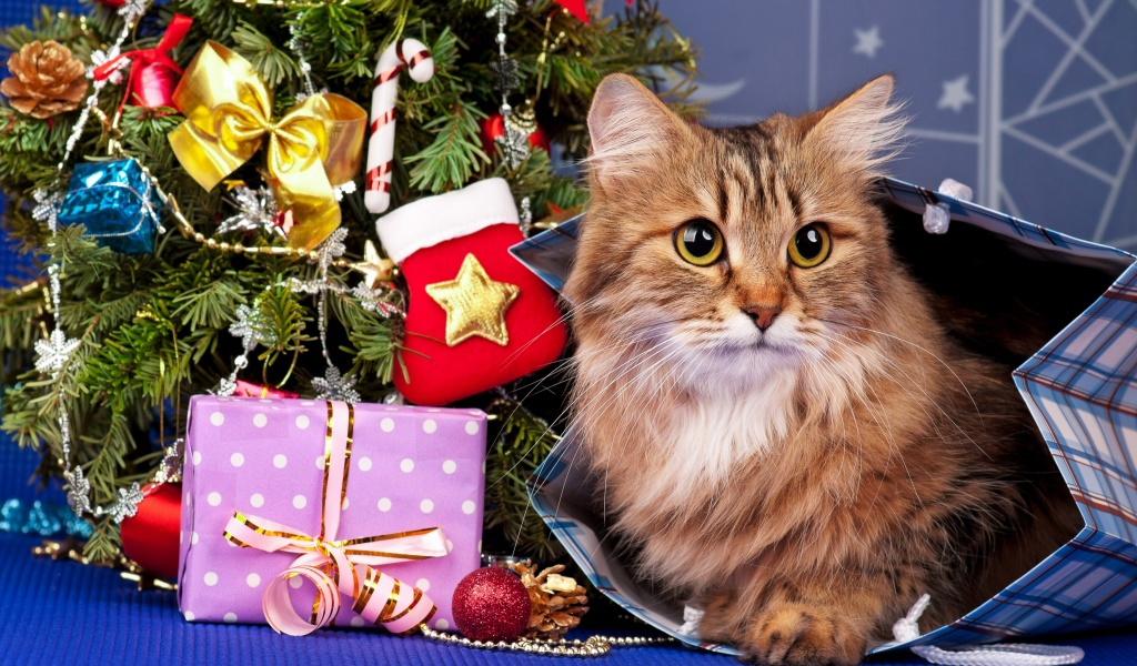 Screenshot №1 pro téma Merry Christmas Cards Wishes with Cat 1024x600