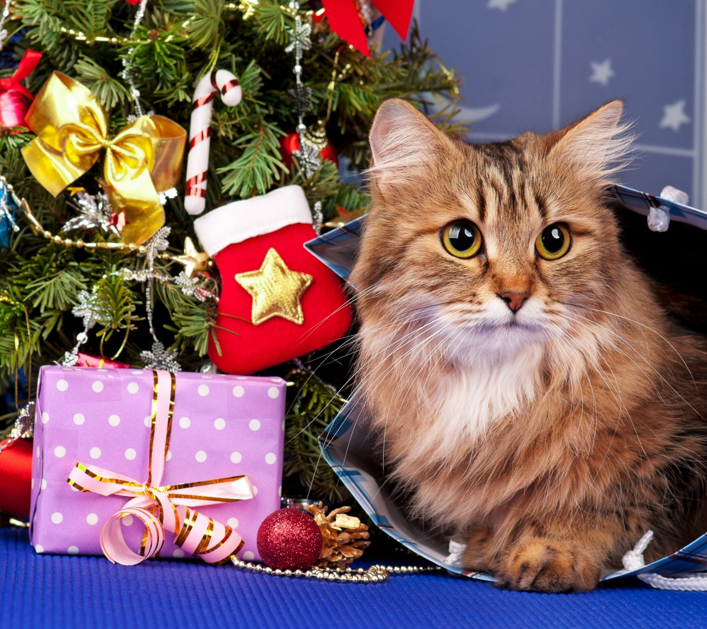 Screenshot №1 pro téma Merry Christmas Cards Wishes with Cat 1440x1280