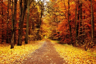 Autumn Pathway Background for Android, iPhone and iPad