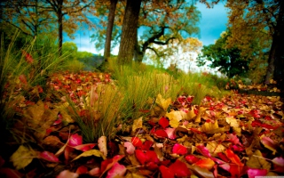 Free Fallen Leaves Picture for Android, iPhone and iPad