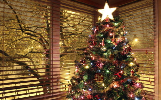 Free Christmas Tree With Star On Top Picture for Android, iPhone and iPad
