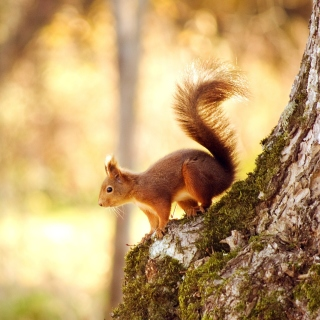 Nice Squirrel sfondi gratuiti per iPad Air