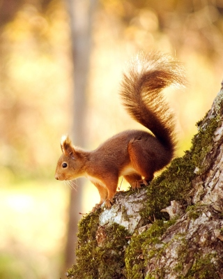Nice Squirrel sfondi gratuiti per iPhone 4S