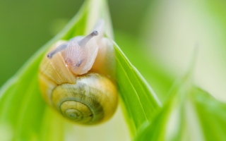 Snail Wallpaper for Android, iPhone and iPad