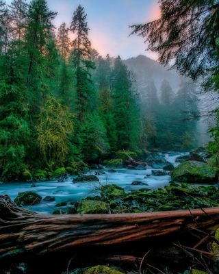 Forest River sfondi gratuiti per iPhone 4S