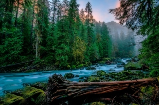 Free Forest River Picture for Android, iPhone and iPad