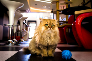 Shaggy Cat Picture for Android, iPhone and iPad