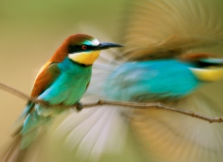 Humming Bird Background for Android, iPhone and iPad
