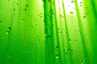 Free Green Drops Of Rain Picture for Android, iPhone and iPad