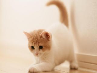 Cute Kitty para Nokia Asha 201