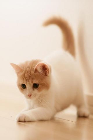 Cute Kitty para Huawei G7300
