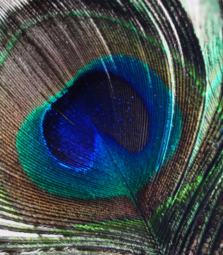 Peacock Feather sfondi gratuiti per 128x160