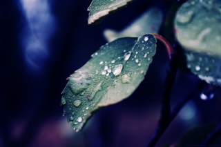 Drops On Leaf - Fondos de pantalla gratis