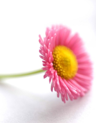 Beautiful Pink Flower Picture for Nokia Asha 311