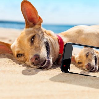 Dog beach selfie on iPhone 7 papel de parede para celular para iPad 3