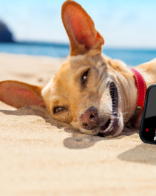 Dog beach selfie on iPhone 7 Wallpaper for Nokia Asha 310