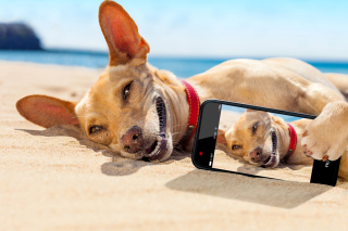 Dog beach selfie on iPhone 7 papel de parede para celular para 1600x900