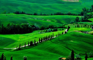 Green Countryside Picture for Android, iPhone and iPad