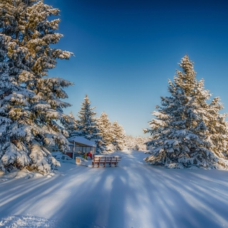 Spruce Forest in Winter sfondi gratuiti per 1024x1024