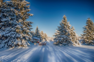 Spruce Forest in Winter - Fondos de pantalla gratis