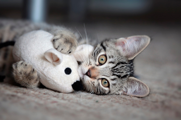 Adorable Kitten With Toy Mouse wallpaper